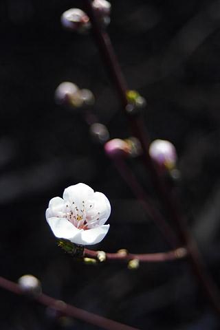 VNZ007spring_flower01.jpg