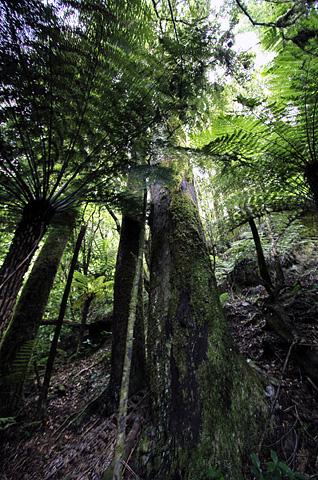 VivaNZ005_forest.jpg