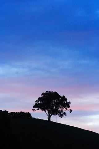006riwaka_one_tree01.jpg