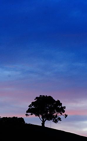 006riwaka_one_tree01_002.jpg