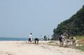 「直島ビーチコーミング&クリンアップ2009」開催のお知らせ