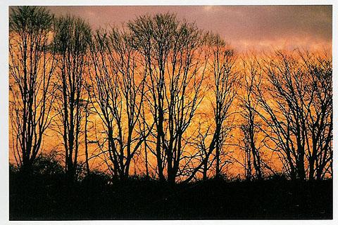 006nature_landscapes_p27.jpg