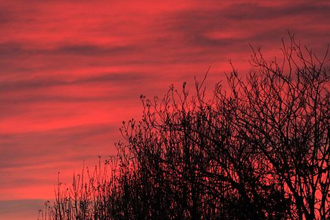 006riwaka_sunrise_tree.jpg