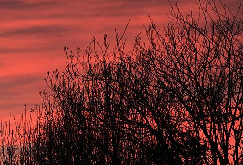 006riwaka_sunrise_tree002.jpg