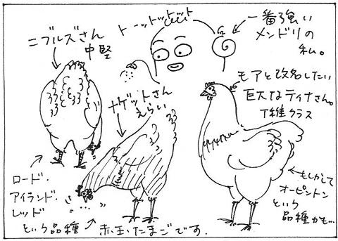 cartoon016_002chooks.jpg