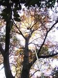 紅葉に包まれてツリーイング